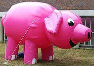 Dart Schwein